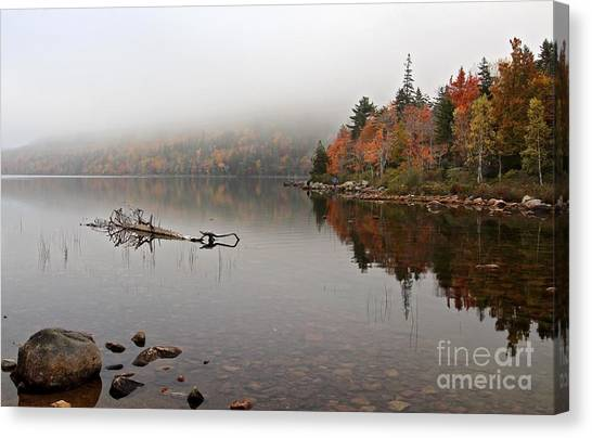 Acadia In The Fog Canvas Print