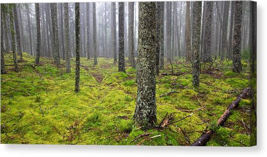 Acadia Woods Canvas Print