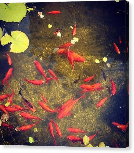 Koi Canvas Print - According To #japanese #legend, If A by Nila Sivatheesan