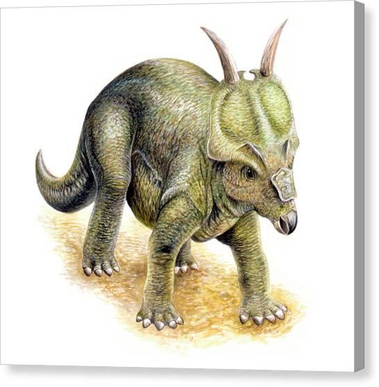 Argentinian Canvas Print - Achelousaurus Dinosaur by Deagostini/uig