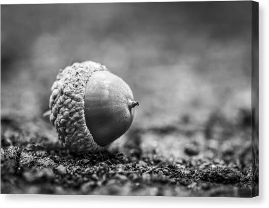Canvas Print featuring the photograph Acorn. by Gary Gillette