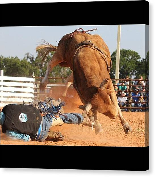 Rodeos Canvas Print - #action #actionshot #bull by Lisa Yow