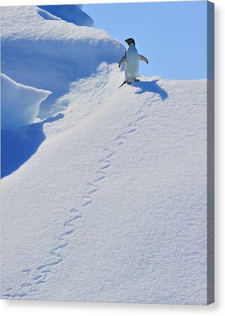 Adelie Penguin On Bergie Bit Canvas Print