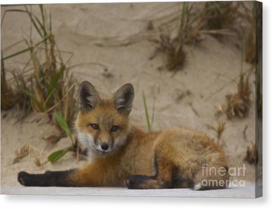 Adorable Baby Fox Canvas Print