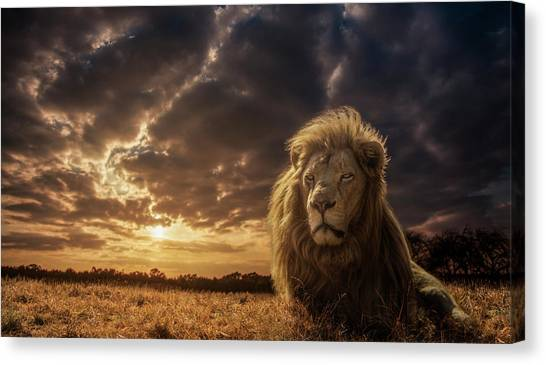 Powerful Canvas Print - Adventures On Savannah - The Lion King by Jackson Carvalho