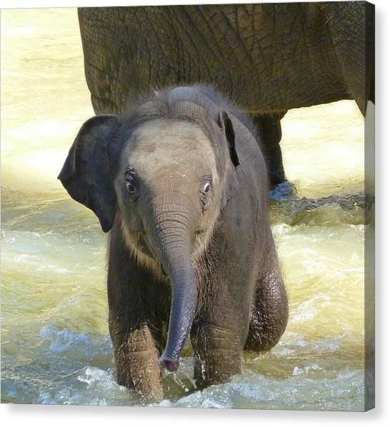 Adventurous Baby Asian Elephant  Canvas Print