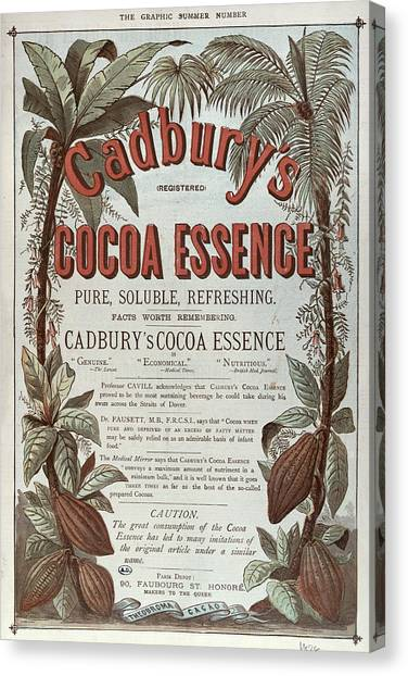 Coffee Plant Canvas Print - Advertisement For Cadburs Cocoa Essence From The Graphic by English School