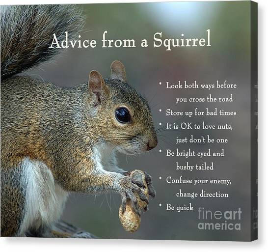 Advice From A Squirrel Canvas Print