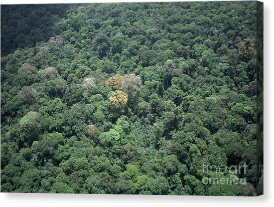Costa Rican Canvas Print - Aerial Of Costa Rican Rainforest by Gregory G. Dimijian, M.D.