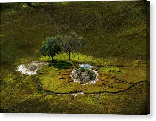 Okavango Swamp Canvas Print - Aerial View Of A Vast Plain by Beverly Joubert