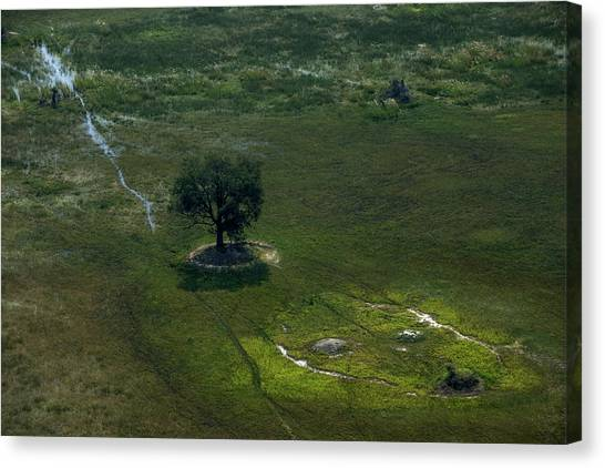 Okavango Swamp Canvas Print - Aerial Views Of Wetlands by Beverly Joubert
