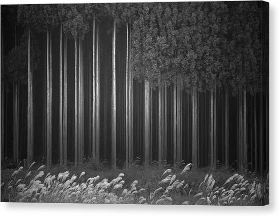 Tree Trunks Canvas Print - Afforestation by Tsuneya Fujii