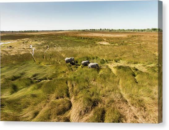 Okavango Swamp Canvas Print - Africa, Botswana, Moremi Game Reserve by WorldFoto