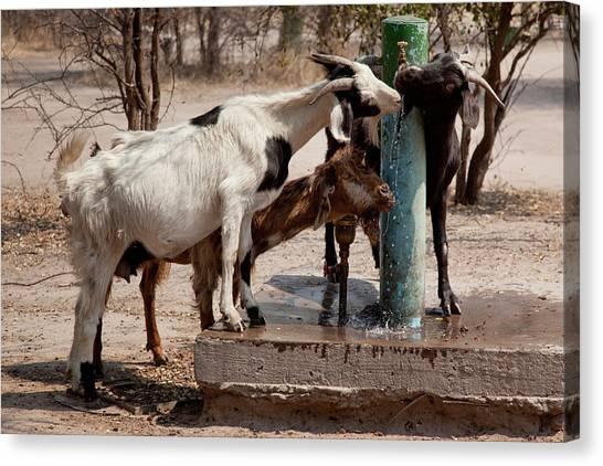 Kalahari Desert Canvas Print - Africa, Botswana, Western Kalahari by Jaynes Gallery