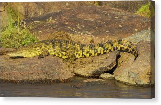 Crocodiles Canvas Print - Africa Tanzania Nile Crocodile by Ralph H. Bendjebar