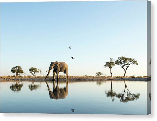 African Elephant At Water Hole, Botswana Canvas Print