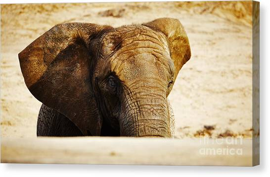 African Elephant Behind A Hill Canvas Print
