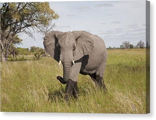 Okavango Swamp Canvas Print - African Elephant Okavango Delta Botswana by Dickie Duckett