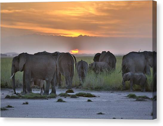 African Elephants At Sunset Canvas Print by 1001slide