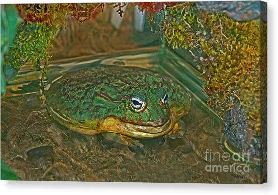 African Pixie Frog In Water Canvas Print