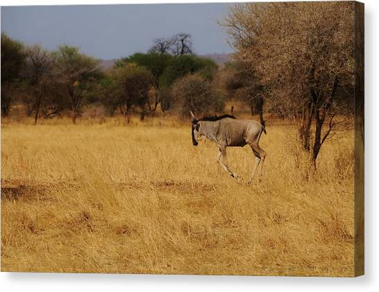 African Series Grass Canvas Print by Katherine Green