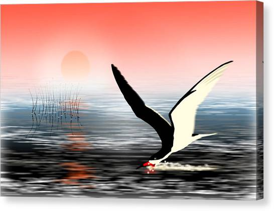 Congo River Canvas Print - African Skimmer Congo River by Gerard O Reilly