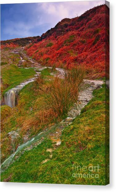 After The Rain - Moorland Streams Canvas Print