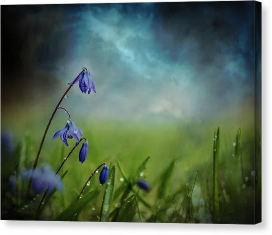 Grass Canvas Print - After The Spring Rain by ?smund Kv?rnstr?m