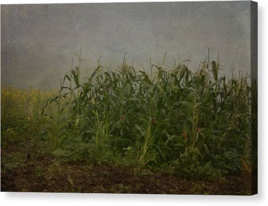 Vegetable Garden Canvas Print - After The Wind by Susan Capuano