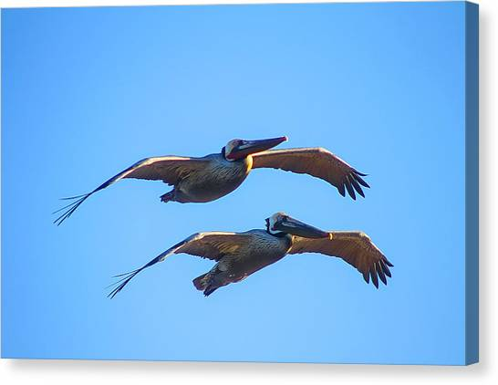 Afternoon Flight. Canvas Print