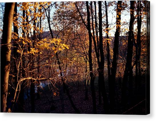 Afternoon Foliage Canvas Print by Brian Lucia