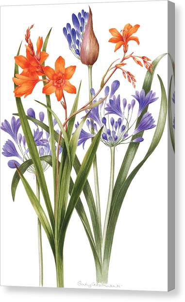 The Nile Canvas Print - Agapanthus And Crocosmia by Sally Crosthwaite