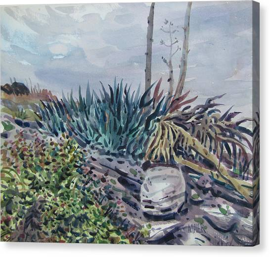 Agave Canvas Print by Donald Maier