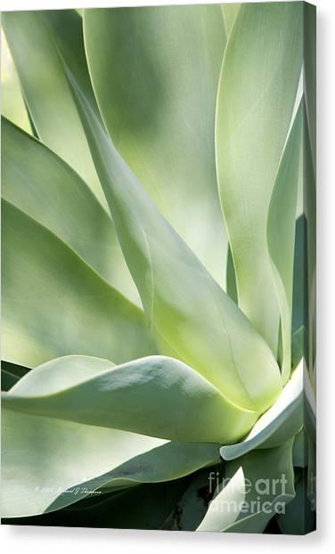 Agave Plant 2 Canvas Print