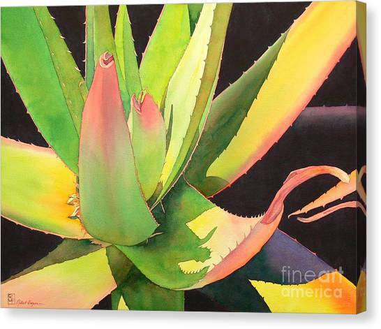 Watercolor Canvas Print - Agave by Robert Hooper