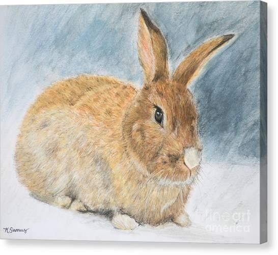Agouti Pet Rabbit Canvas Print