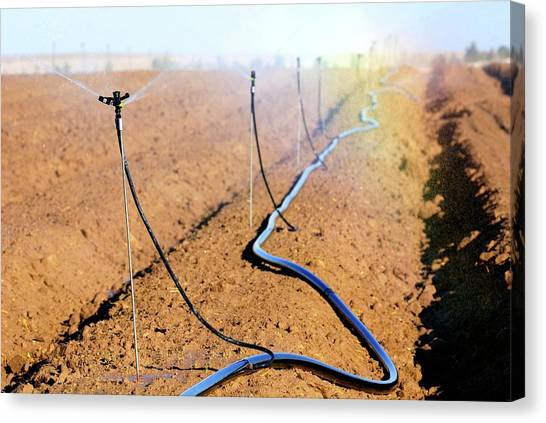 Negev Desert Canvas Print - Agricultural Irrigation by Photostock-israel/science Photo Library