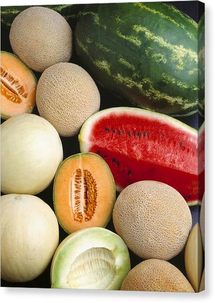 Honeydews Canvas Print - Agriculture - Mixed Melons, Watermelon by Ed Young