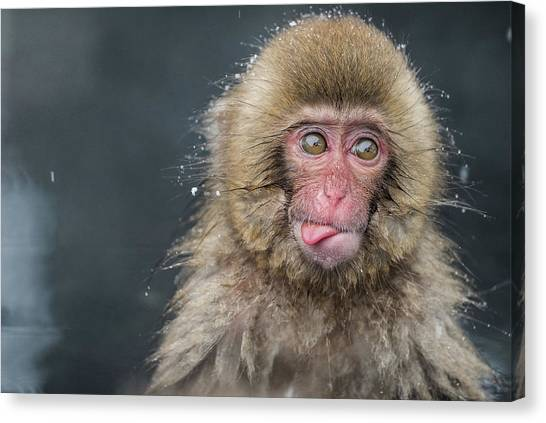 Monkeys Canvas Print - (a???i??a???)i???i???i???i???i??? by Takeshi Marumoto