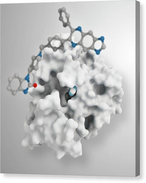 Critical Canvas Print - Akt1 Human Enzyme Molecule by Ramon Andrade 3dciencia/science Photo Library