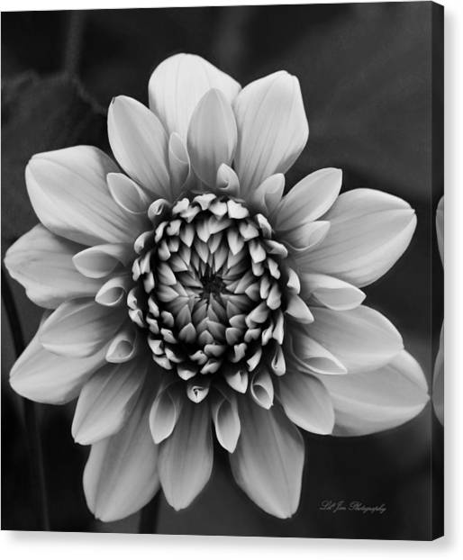 Ala Mode Dahlia In Black And White Canvas Print