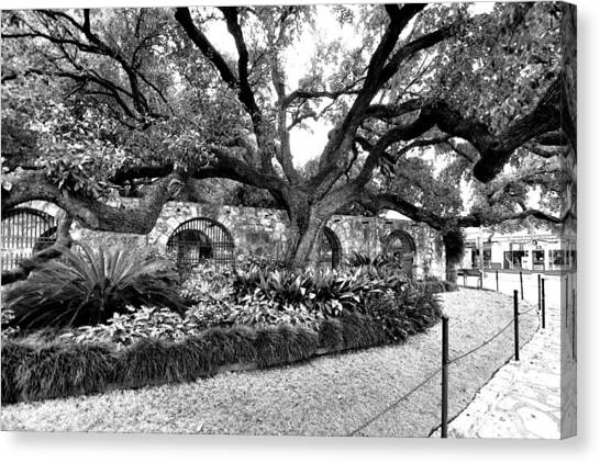 Alamo Grounds Canvas Print