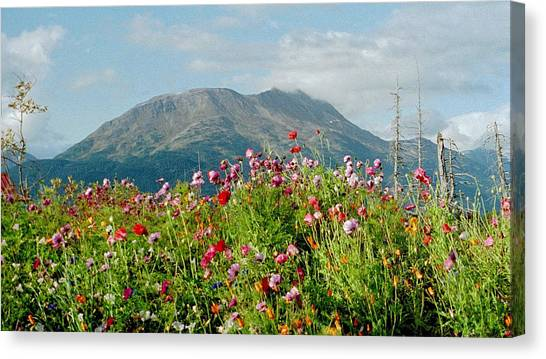 Alaska Flowers In September Canvas Print