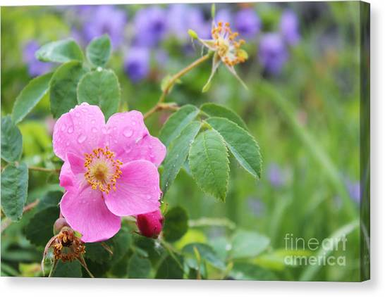 Alaska Wildflowers Canvas Print