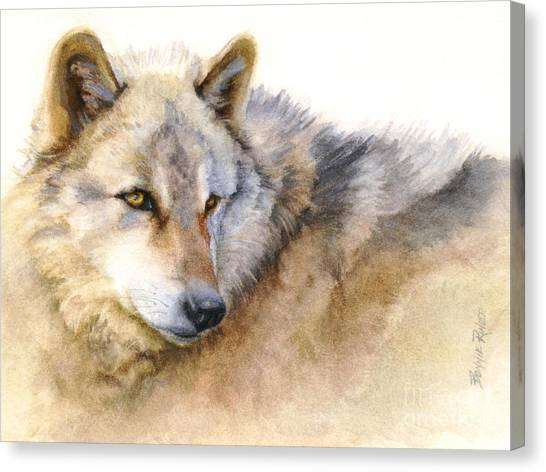 Alaskan Gray Wolf Canvas Print