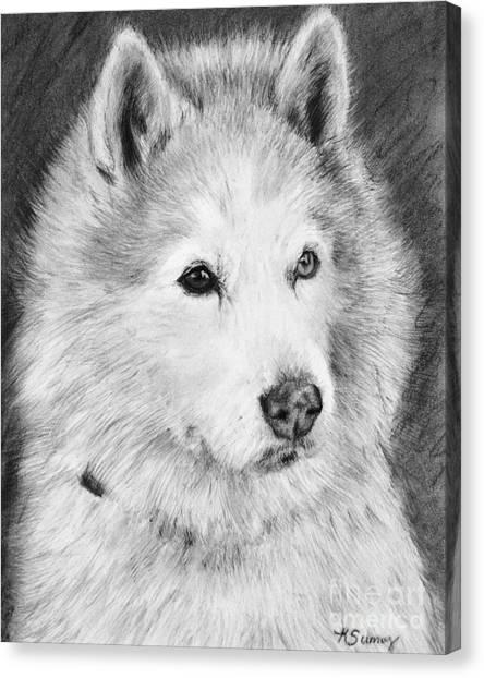 Alaskan Malamute Drawing Mardi Canvas Print