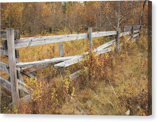 Alberta Ranchlands - Abandoned Corral Canvas Print