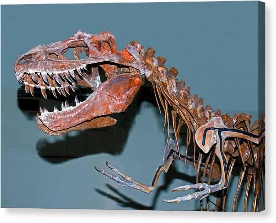 Albertosaurus Canvas Print - Albertosaurus Fossil Skeleton by Millard H. Sharp
