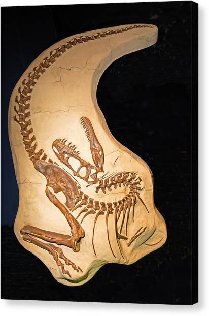 Albertosaurus Canvas Print - Albertosaurus by Millard H. Sharp