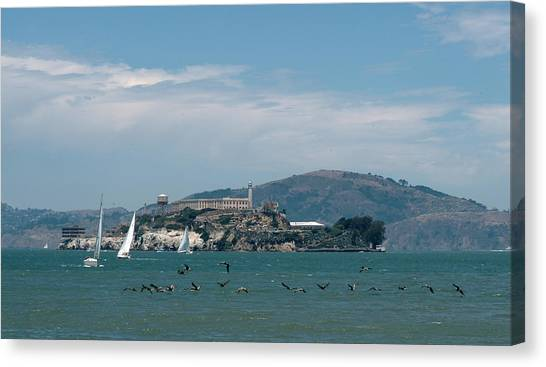 Alcatraz With Pelicans Canvas Print